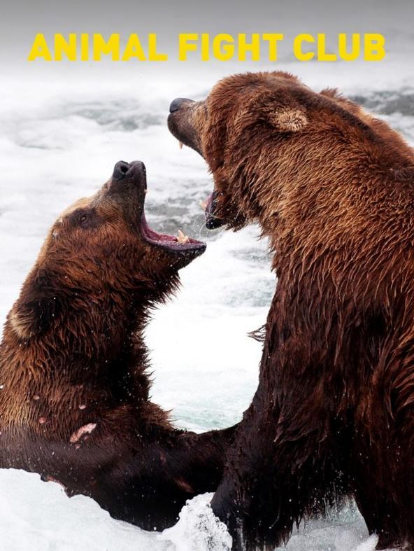 Tra elefanti e orsi polari