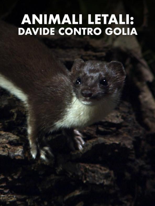 Animali letali: Davide contro Golia