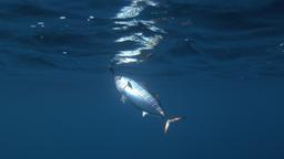 Il big fish tournament di Ventotene