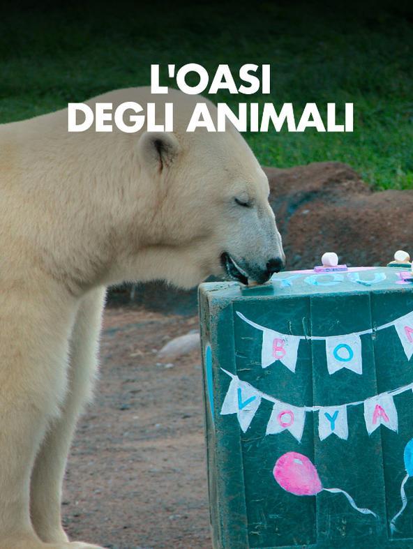 L'oasi degli animali - -