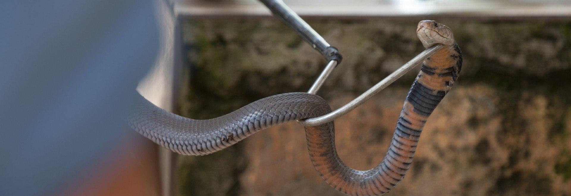 Squadra speciale serpenti: casi estremi